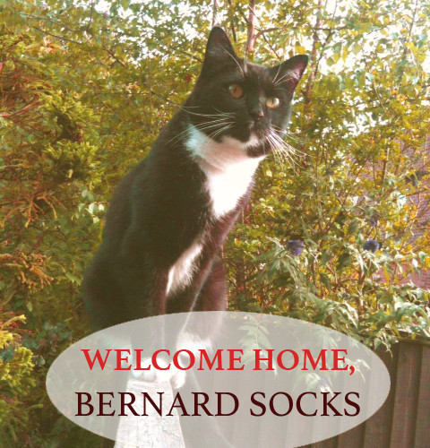 Welcome Home, Bernard Socks!
